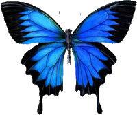 Пеперуди за подарък